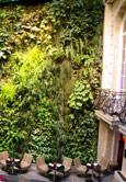 JARDINES VERTICALES, texturas vegetales ecológicas
