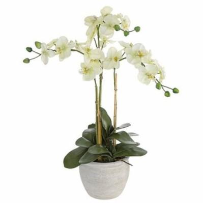 Secretos para cuidar orquídeas