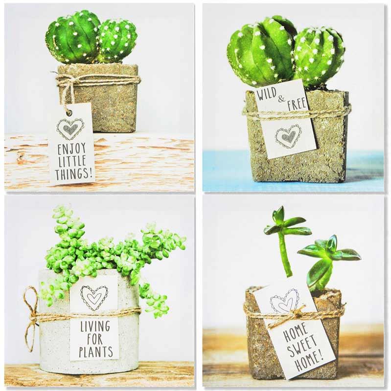 cuadros de cactus baratos