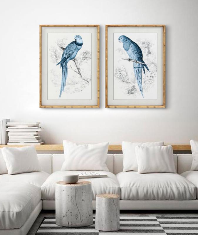 cuadros de papagayos en azul