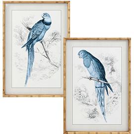 cuadros de aves azules