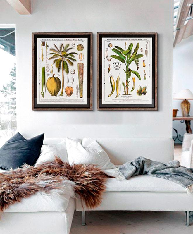 cuadros de flores y plantas