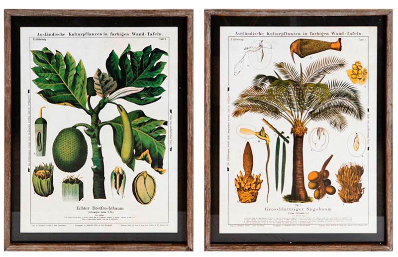 cuadros laminas plantas