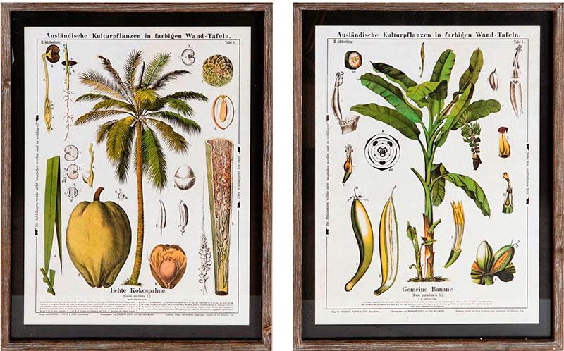 cuadros de plantas naturales