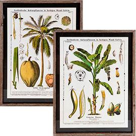 cuadro plantas
